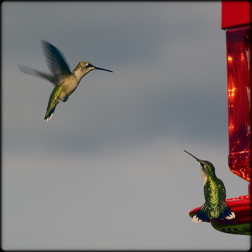 Hummingbird: O Google reinventa a busca na web